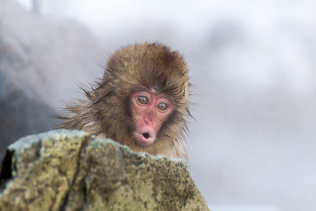 Cute News Alert! Sleeping baby Snow Monkeys smile like humans?